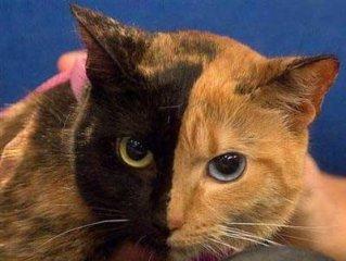 نادرترين گربه جهان