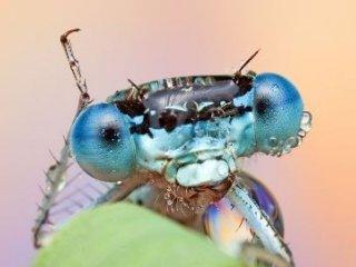 آنچه باران بر سر حشرات می آورد