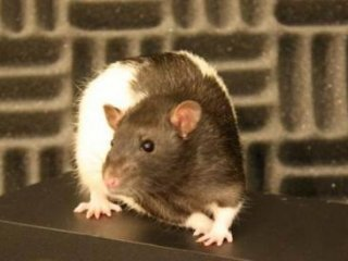 کنترل روياهای موش و تکنيک های توسعه خاطرات