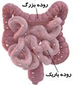 علائم سرطان روده بزرگ و مراحل تشخیص آن