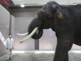 حيرت دانشمندان از فيلی که میتواند صحبت کند!
