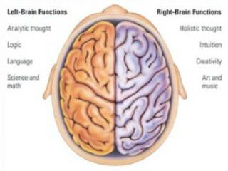 تکامل نيمکره های مغز وآينده نوآوری